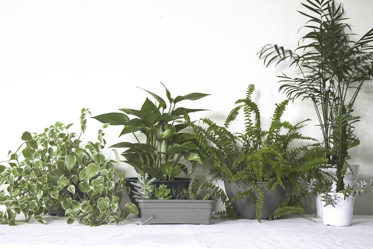 escolha de plantas para o apartamento