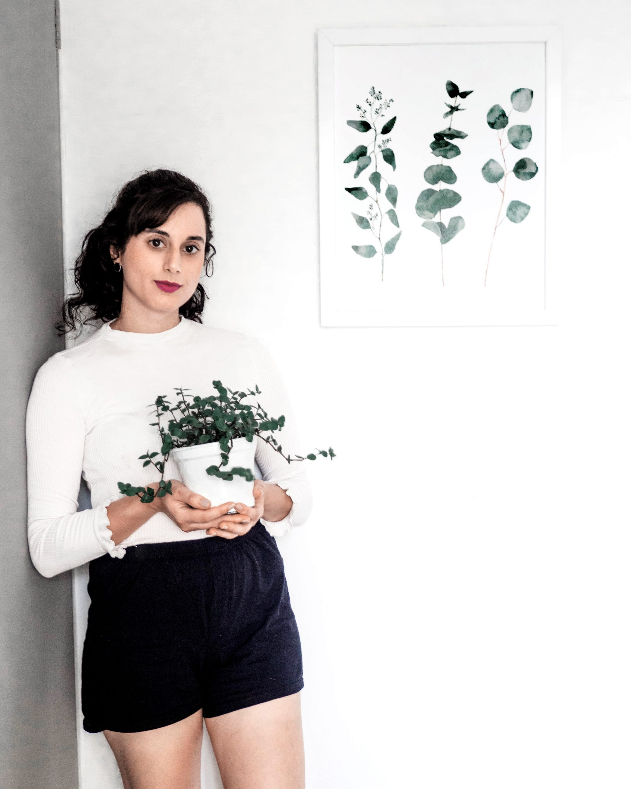 as melhores plantas para ambiente interno